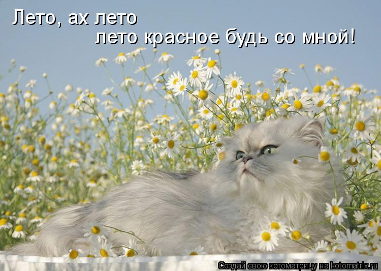 Котоматрица: Лето, ах лето лето красное будь со мной!