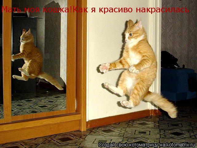 Котоматрица: Мать моя кошка!Как я красиво накрасилась