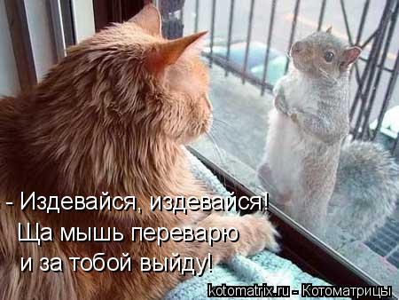 Котоматрица: Ща мышь переварю  и за тобой выйду!  - Издевайся, издевайся!