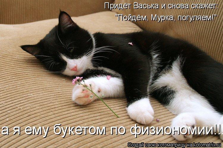 """Котоматрица: Придёт Васька и снова скажет: """"Пойдём, Мурка, погуляем!"""" а я ему букетом по физиономии!!!"""