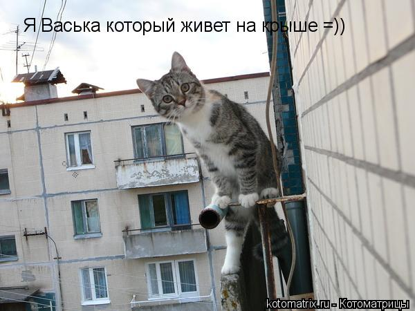 Котоматрица: Я Васька который живет на крыше =))