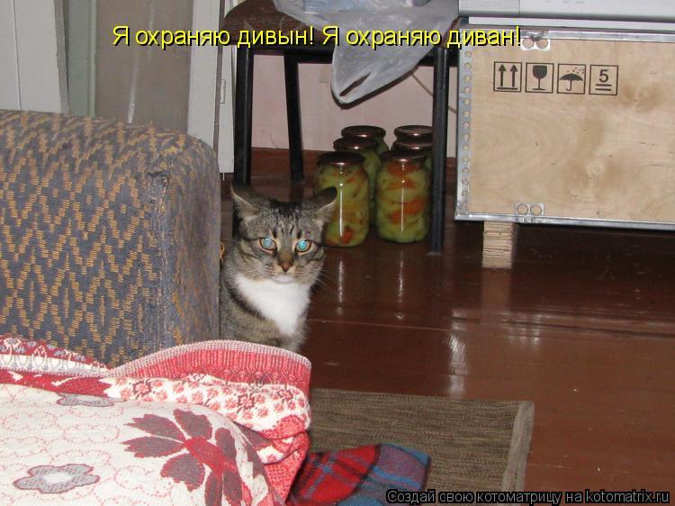 Котоматрица: Я охраняю дивын! Я охраняю диван!