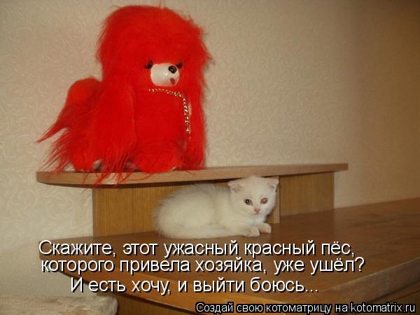 Котоматрица: которого привела хозяйка, уже ушёл? Скажите, этот ужасный красный пёс,  И есть хочу, и выйти боюсь...
