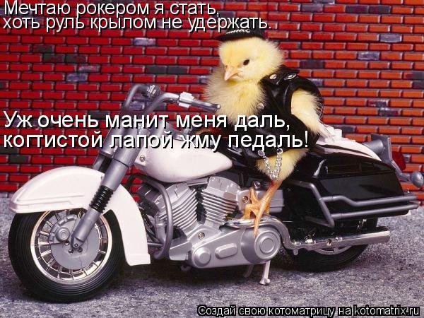 Котоматрица: Мечтаю рокером я стать, хоть руль крылом не удержать. Уж очень манит меня даль, когтистой лапой жму педаль!