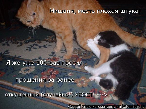 Котоматрица: Мишаня, месть плохая штука! откущенный (случайно!) ХВОСТ! ---> Я же уже 100 раз просил прощения за ранее