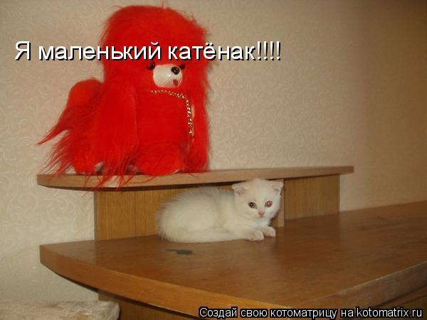 Котоматрица: Я маленький катёнак!!!!