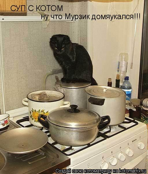 Котоматрица: СУП С КОТОМ ну что Мурзик домяукался!!!