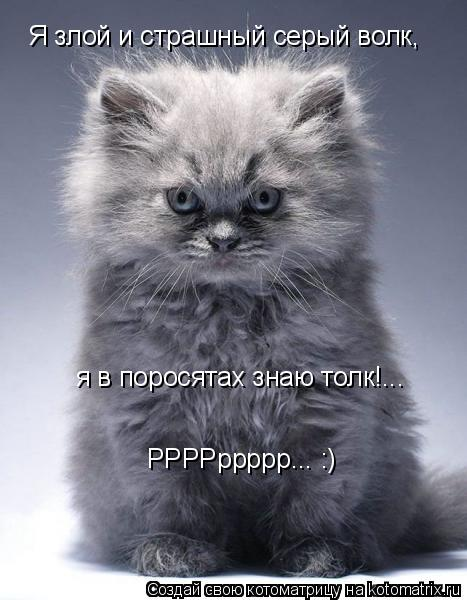 Котоматрица: Я злой и страшный серый волк, я в поросятах знаю толк!... РРРРррррр... :)