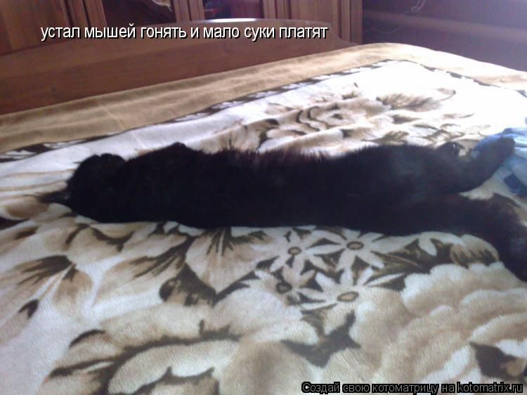 Котоматрица: устал мышей гонять и мало суки платят