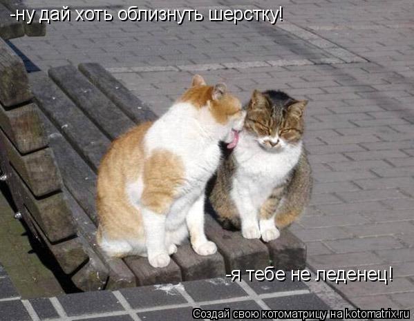 Котоматрица: -ну дай хоть облизнуть шерстку! -я тебе не леденец!