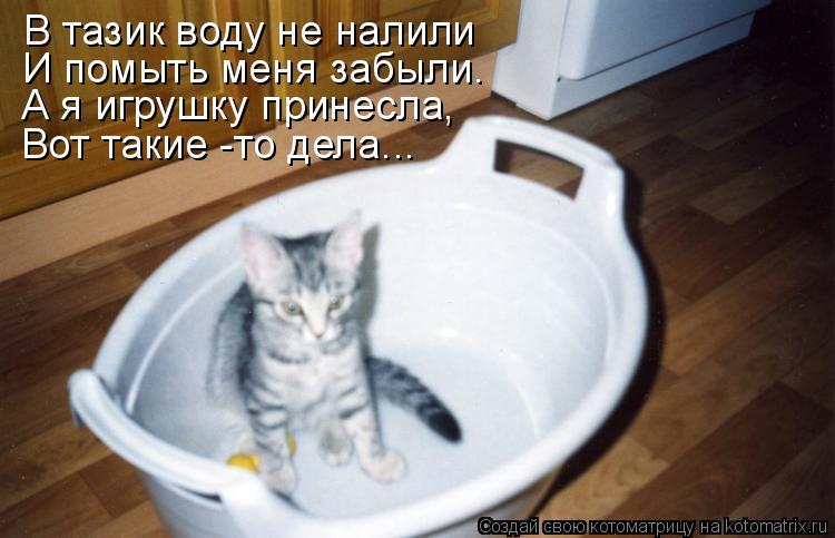 Котоматрица: В тазик воду не налили И помыть меня забыли. А я игрушку принесла, Вот такие -то дела...