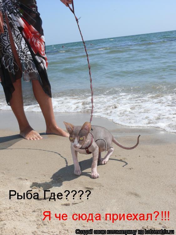 Котоматрица: Рыба Где???? Я че сюда приехал?!!!