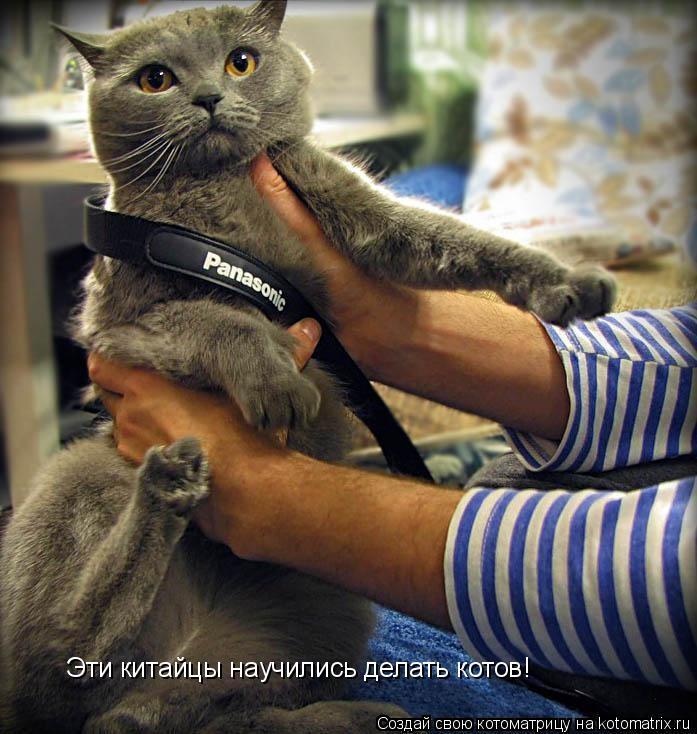 Котоматрица: Эти китайцы научились делать котов!