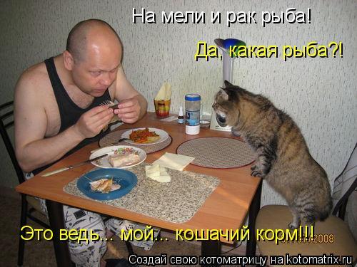 Котоматрица: На мели и рак рыба!  Да, какая рыба?!  Это ведь... мой... кошачий корм!!!