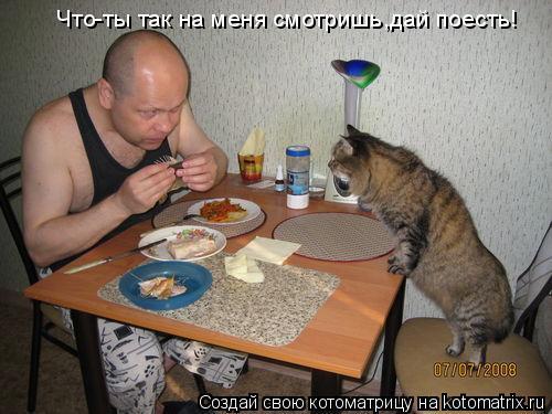 Котоматрица: Что-ты так на меня смотришь,дай поесть! Что-ты так на меня смотришь,дай поесть!