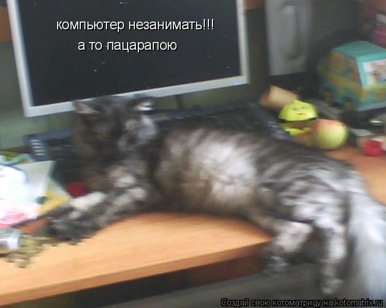 Котоматрица: компьютер незанимать!!! а то пацарапою