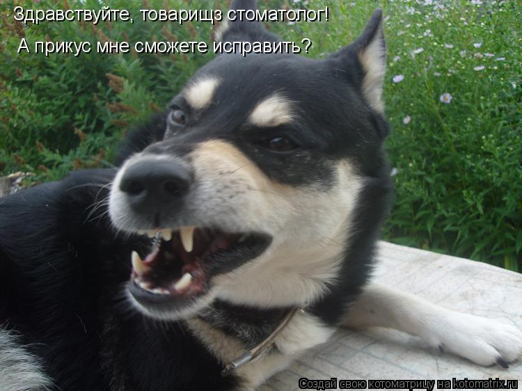 Котоматрица: Здравствуйте, товарищз стоматолог! А прикус мне сможете исправить?