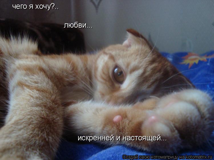 Котоматрица: чего я хочу?.. любви... искренней и настоящей...