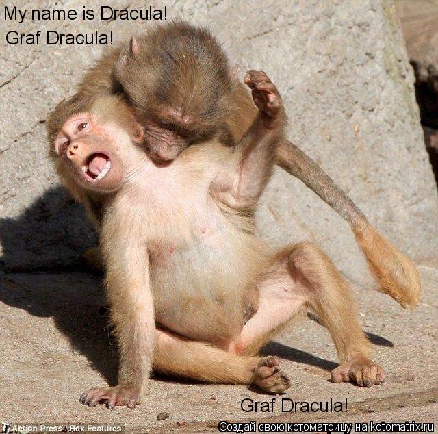Котоматрица: My name is Dracula! Graf Dracula! Graf Dracula!