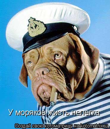 Котоматрица: У моряков жисть нелегка