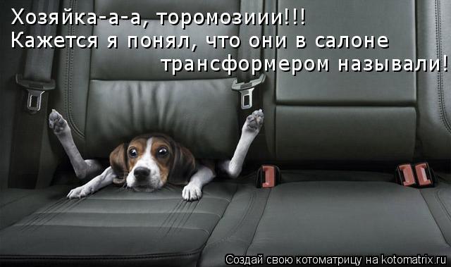 Котоматрица: Хозяйка-а-а, торомозиии!!! Кажется я понял, что они в салоне  трансформером называли!