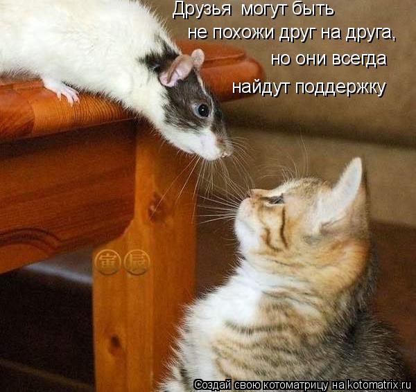 Котоматрица: Друзья могут быть не похожи друг на друга, но они всегда найдут поддержку