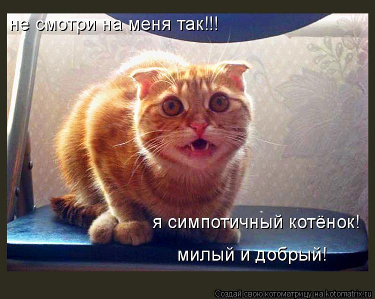 Котоматрица: не смотри на меня так!!! я симпотичный котёнок! милый и добрый!