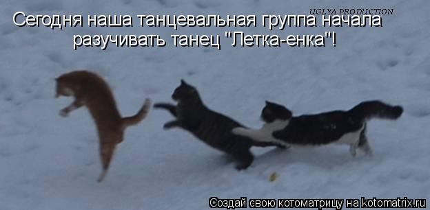 """Котоматрица: Сегодня наша танцевальная группа начала разучивать танец """"Летка-енка""""!"""