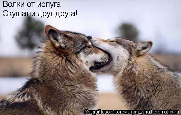 Котоматрица: Волки от испуга Скушали друг друга!