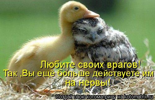 Котоматрица: Любите своих врагов! Так ,Вы ещё больше действуете им на нервы!