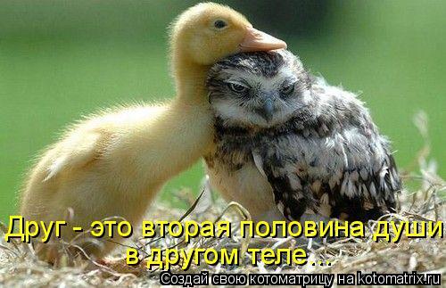 Котоматрица: в другом теле... Друг - это вторая половина души