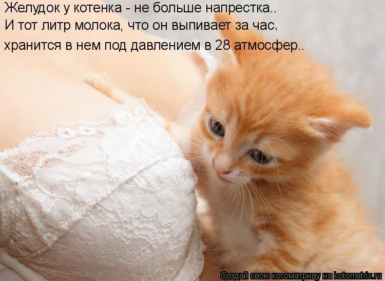 Котоматрица: Желудок у котенка - не больше напрестка.. И тот литр молока, что он выпивает за час хранится в нем под давлением в 28 атмосфер.. ,