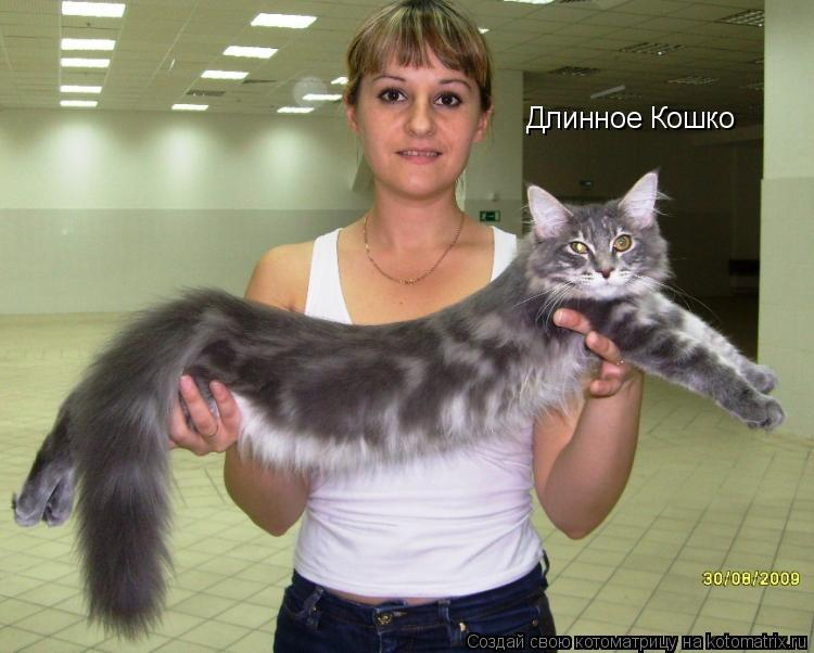 Котоматрица: Длинное Кошко