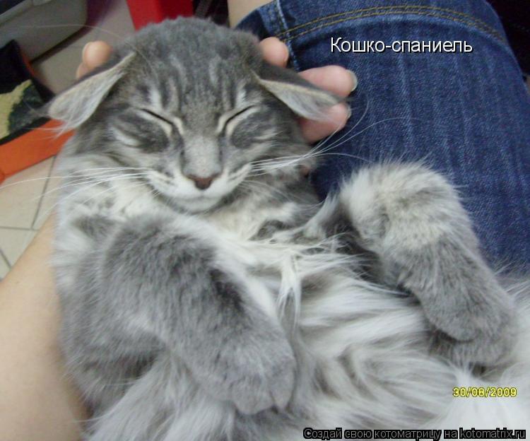 Котоматрица: Кошко-спаниель