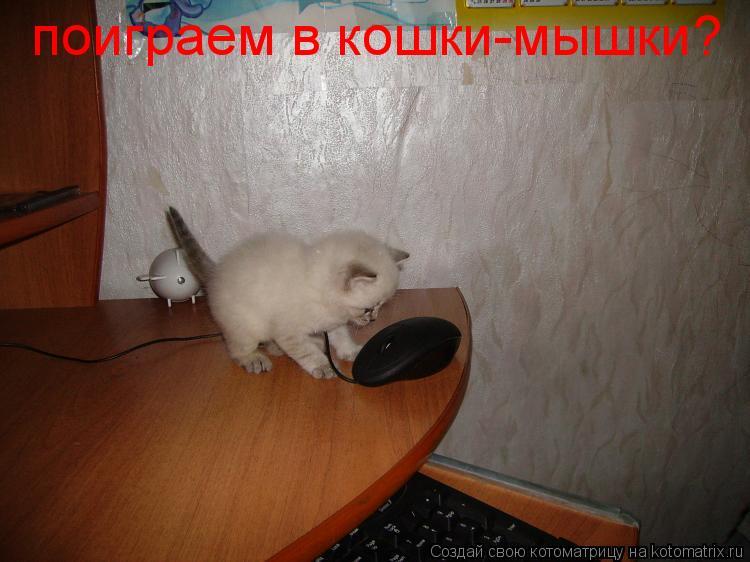 Котоматрица: поиграем в кошки-мышки?