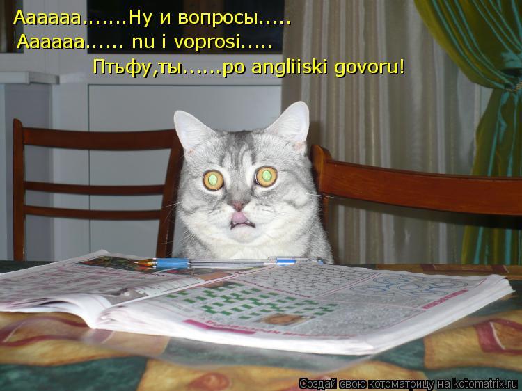 Котоматрица: Аааааа.......Ну и вопросы..... Aaaaaa...... nu i voprosi..... Птьфу,ты......po angliiski govoru!