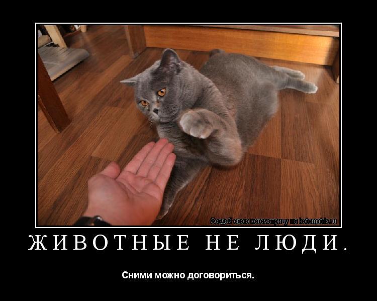 Котоматрица: Животные не люди. Сними можно договориться.
