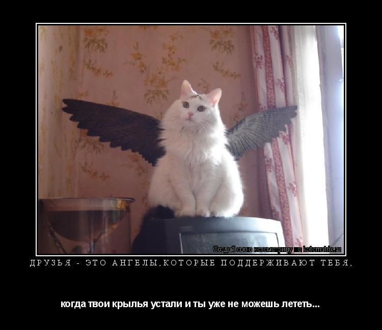 Котоматрица: Друзья - это ангелы,которые поддерживают тебя, когда твои крылья устали и ты уже не можешь лететь...