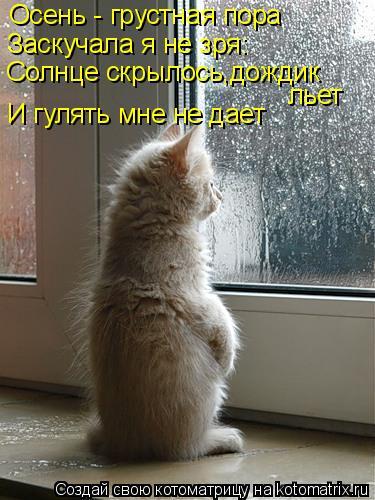 Котоматрица: Осень - грустная пора Заскучала я не зря: Солнце скрылось,дождик льет И гулять мне не дает