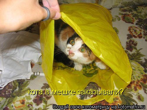 Котоматрица: кота в мешке заказывали?