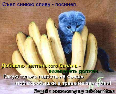 Котоматрица: Добавлю жёлтенького банана -  Какую только гадость не съешь, чтоб воробышки в траве не заметили! позеленеть должен... Съел синюю сливу - посин