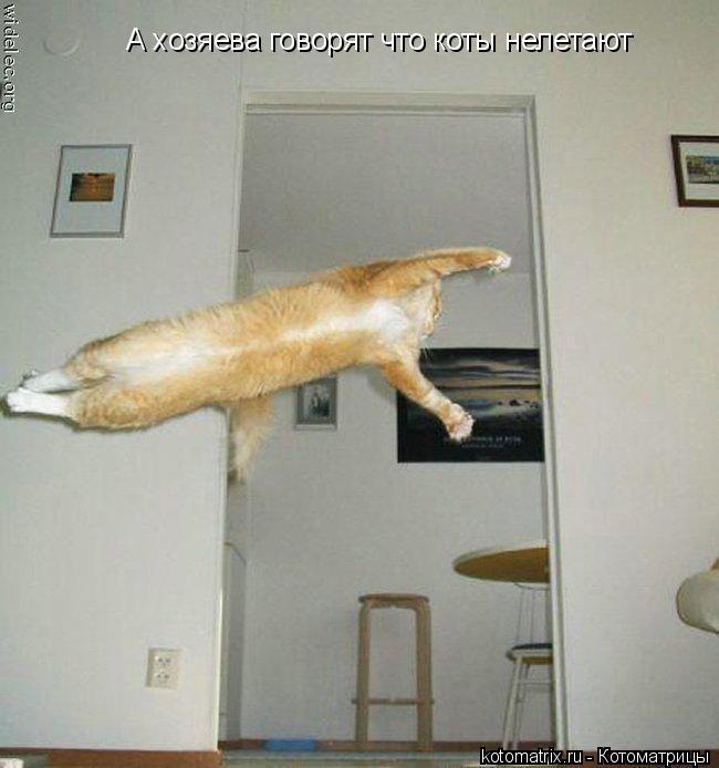 Котоматрица: А хозяева говорят что коты нелетают