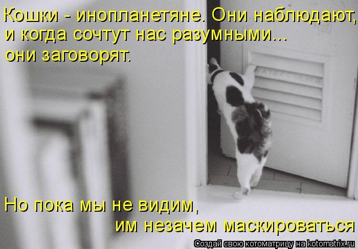 Котоматрица: Кошки - инопланетяне. Они наблюдают,  и когда сочтут нас разумными... они заговорят. Но пока мы не видим, им незачем маскироваться