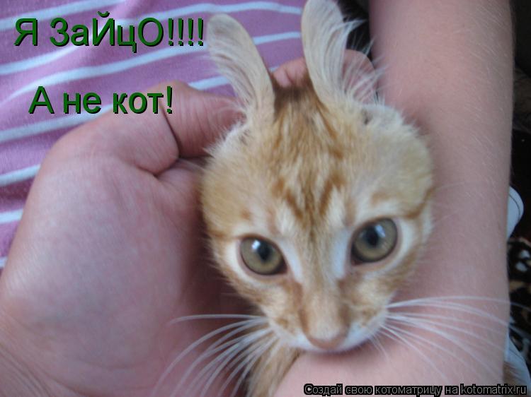 Котоматрица: Я ЗаЙцО!!!! А не кот!