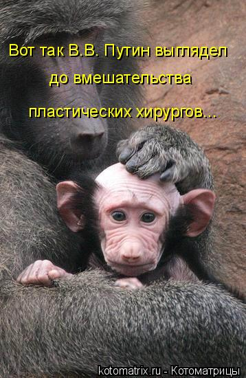 Котоматрица: Вот так В.В. Путин выглядел до вмешательства пластических хирургов...