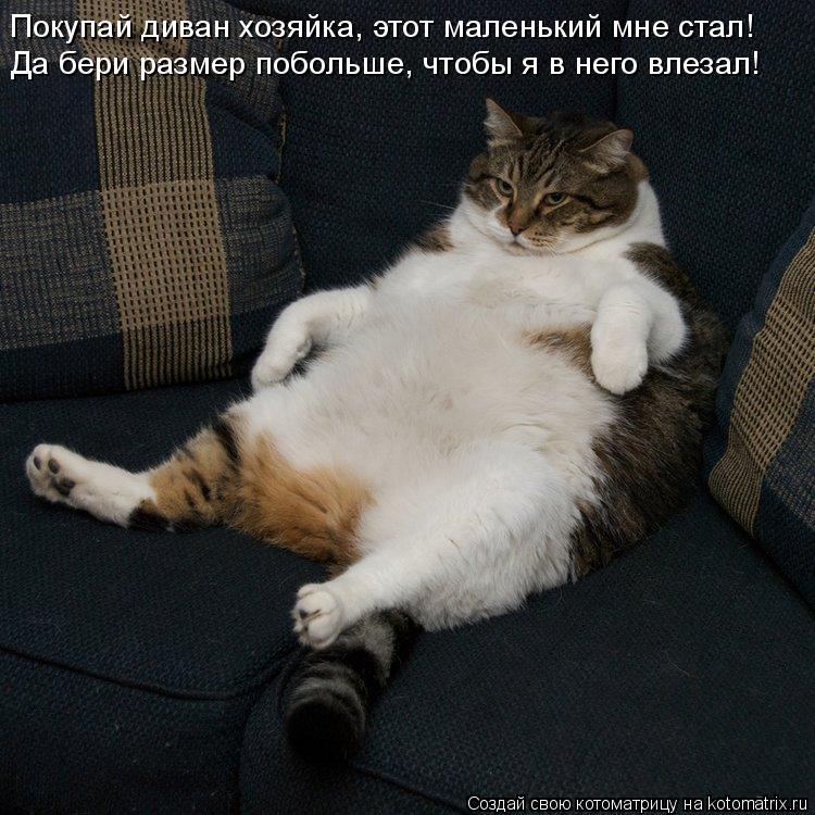 Котоматрица: Покупай диван хозяйка, этот маленький мне стал! Да бери размер побольше, чтобы я в него влезал!