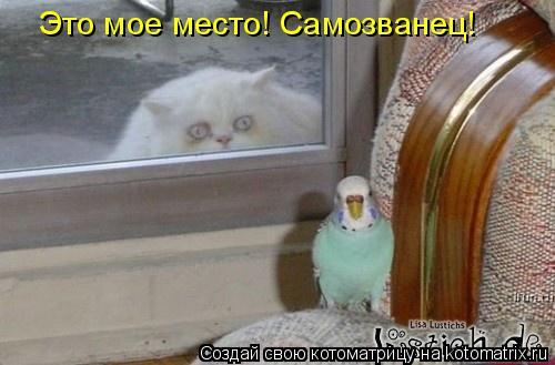 Котоматрица: Это мое место! Самозванец!