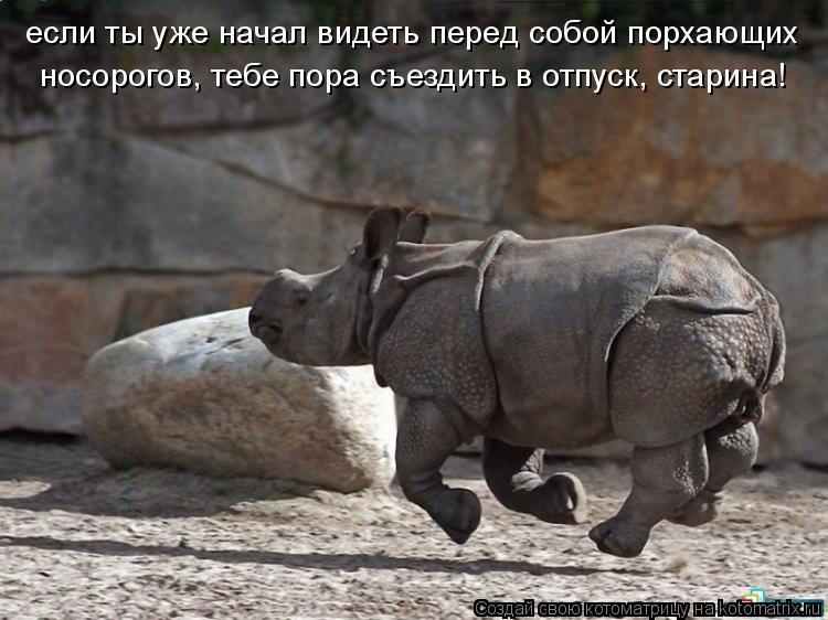 Котоматрица: если ты уже начал видеть перед собой порхающих  носорогов, тебе пора съездить в отпуск, старина!