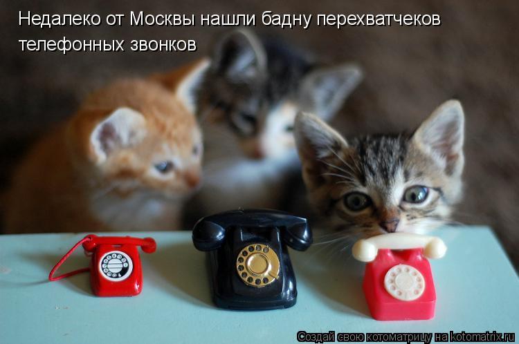Котоматрица: Недалеко от Москвы нашли бадну перехватчеков телефонных звонков