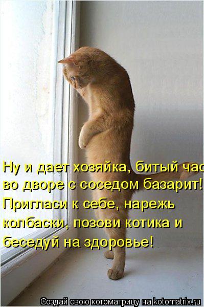 Котоматрица: во дворе с соседом базарит! Ну и дает хозяйка, битый час Пригласи к себе, нарежь  колбаски, позови котика и беседуй на здоровье!